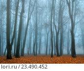Купить «Осенний пустынный парк в тумане», фото № 23490452, снято 6 ноября 2015 г. (c) Зезелина Марина / Фотобанк Лори