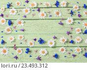 Купить «flowers over green wooden background», фото № 23493312, снято 12 июня 2016 г. (c) Майя Крученкова / Фотобанк Лори