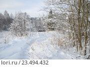 Купить «Зимний сельский пейзаж», эксклюзивное фото № 23494432, снято 24 января 2016 г. (c) Елена Коромыслова / Фотобанк Лори