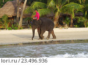 Купить «Мужчина едет верхом на слоненке на пляже Кай Бей на острове Ко Чанг, Таиланд», фото № 23496936, снято 21 августа 2016 г. (c) Natalya Sidorova / Фотобанк Лори
