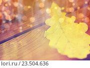 Купить «close up of yellow oak tree autumn leaf on wood», фото № 23504636, снято 19 октября 2015 г. (c) Syda Productions / Фотобанк Лори