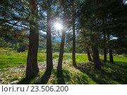 Купить «Деревья в лучах солнца в горах», фото № 23506200, снято 24 августа 2016 г. (c) Анатолий Типляшин / Фотобанк Лори