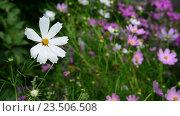 Купить «Полевые цветы в саду», видеоролик № 23506508, снято 22 августа 2016 г. (c) Володина Ольга / Фотобанк Лори