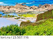 Купить «Summer blossoming Atlantic coastline (Galicia).», фото № 23507116, снято 11 мая 2016 г. (c) Юрий Брыкайло / Фотобанк Лори