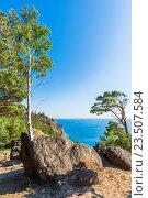 Деревья растут прямо на камнях. Стоковое фото, фотограф Андрей Валерьевич Иванов / Фотобанк Лори