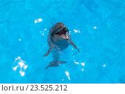 Купить «Улыбающийся дельфин», фото № 23525212, снято 2 августа 2016 г. (c) Михаил Коханчиков / Фотобанк Лори