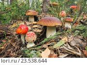 Купить «Грибное место, содружество разных грибов», фото № 23538644, снято 16 сентября 2016 г. (c) Александр Романов / Фотобанк Лори