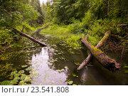 Лесная болотная речка в заповеднике Кологривский лес, фото № 23541808, снято 13 августа 2016 г. (c) Сергей Александров / Фотобанк Лори
