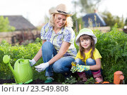 Купить «Mother and daughter engaged in gardening together», фото № 23549808, снято 3 сентября 2015 г. (c) Оксана Кузьмина / Фотобанк Лори