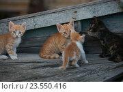 Бездомная кошка и котята в старой лодке в болгарском городе Поморие. Стоковое фото, фотограф Ткачёва Ольга / Фотобанк Лори