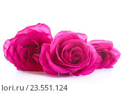 Купить «Букет роз», фото № 23551124, снято 16 сентября 2016 г. (c) Peredniankina / Фотобанк Лори