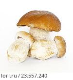 Купить «Белые грибы или боровики (лат. Boletus edulis) на белом фоне», фото № 23557240, снято 28 августа 2016 г. (c) Елена Коромыслова / Фотобанк Лори