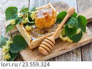Купить «Цветы липы и мед в сотах», фото № 23559324, снято 21 июня 2015 г. (c) Марина Сапрунова / Фотобанк Лори