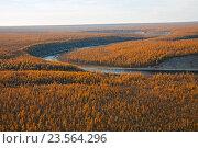 Купить «Сибирская лиственничная тайга осенью», фото № 23564296, снято 4 сентября 2015 г. (c) Олег Елагин / Фотобанк Лори