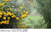 Купить «Flowers in garden during the rain», видеоролик № 23573208, снято 31 июля 2016 г. (c) Володина Ольга / Фотобанк Лори
