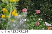 Купить «Flowers in garden during the rain», видеоролик № 23573224, снято 31 июля 2016 г. (c) Володина Ольга / Фотобанк Лори