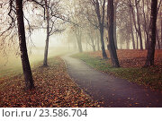 Купить «Autumn landscape - city park alley with bare autumn trees and dry autumn fallen red leaves on the ground in autumn foggy day.», фото № 23586704, снято 6 ноября 2015 г. (c) Зезелина Марина / Фотобанк Лори