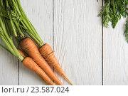 Купить «Freshly grown carrots», фото № 23587024, снято 17 июля 2016 г. (c) Jan Jack Russo Media / Фотобанк Лори