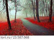 Купить «Misty autumn view of autumn park alley in heavy fog - foggy autumn landscape with bare autumn trees and red fallen leaves», фото № 23587068, снято 6 ноября 2015 г. (c) Зезелина Марина / Фотобанк Лори