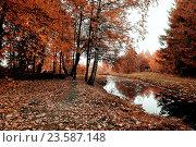 Купить «Autumn trees and narrow forest river in cloudy weather. Autumn gothic landscape in pale colors», фото № 23587148, снято 1 января 2009 г. (c) Зезелина Марина / Фотобанк Лори