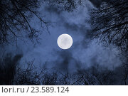 Купить «Night sky gothic landscape with full moon beneath the clouds and silhouettes of the bare trees», фото № 23589124, снято 28 сентября 2015 г. (c) Зезелина Марина / Фотобанк Лори