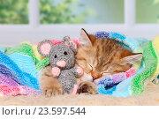 Купить «sleeping British Shorthair Kitten», фото № 23597544, снято 22 июля 2016 г. (c) age Fotostock / Фотобанк Лори