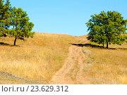 Купить «Грунтовая дорога поднимается вверх», фото № 23629312, снято 26 июня 2019 г. (c) Игорь Кутателадзе / Фотобанк Лори