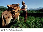 Купить «Woodcutter in Ixtlan de Juarez, Oaxaca, Mexico.», фото № 23633820, снято 7 сентября 2016 г. (c) age Fotostock / Фотобанк Лори