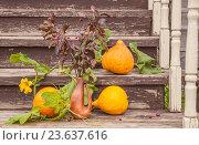 Тыквы и ветки яблоньки, лежащие на ступенях крылечка. Стоковое фото, фотограф Татьяна Назмутдинова / Фотобанк Лори