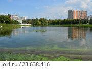 Купить «Капустинский пруд. Район Свиблово. Москва», эксклюзивное фото № 23638416, снято 21 августа 2016 г. (c) lana1501 / Фотобанк Лори