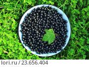 Купить «Миска с черной смородиной, стоящая на траве», фото № 23656404, снято 3 августа 2014 г. (c) Елена Серебрякова / Фотобанк Лори