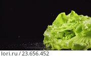 Пучок зеленого салата падает на стол с брызгами (замедленное) Стоковое видео, видеограф Евгений Киблер / Фотобанк Лори