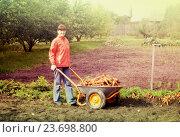 Купить «woman with harvested carrots», фото № 23698800, снято 14 сентября 2011 г. (c) Яков Филимонов / Фотобанк Лори