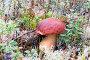 Белый гриб, растущий в лесу, фото № 23708308, снято 20 сентября 2016 г. (c) Алексей Маринченко / Фотобанк Лори