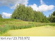 Купить «Летний пейзаж в солнечный день», эксклюзивное фото № 23733972, снято 13 августа 2016 г. (c) Елена Коромыслова / Фотобанк Лори