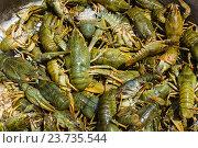 Купить «Живые раки, фон», фото № 23735544, снято 4 июля 2012 г. (c) Олег Жуков / Фотобанк Лори