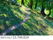 Купить «Тропинка в лиственном лесу», фото № 23744824, снято 10 сентября 2016 г. (c) Игорь Кутателадзе / Фотобанк Лори
