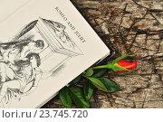 Книга о любви и роза. Стоковое фото, фотограф Olga Goryunova / Фотобанк Лори
