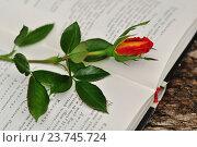 Красная роза и открытая книга. Стоковое фото, фотограф Olga Goryunova / Фотобанк Лори