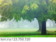 Czech Republic, Prague - foggy morning in the park. Стоковое фото, фотограф courtyardpix / easy Fotostock / Фотобанк Лори