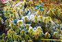 Первые морозы, иней на траве и осенних листьях, фото № 23774700, снято 1 октября 2016 г. (c) Алексей Маринченко / Фотобанк Лори