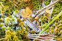 Первые морозы, иней на траве и осенних листьях, фото № 23774704, снято 1 октября 2016 г. (c) Алексей Маринченко / Фотобанк Лори