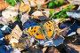 Бабочка крапивница греется на солнце, фото № 23774712, снято 2 октября 2016 г. (c) Алексей Маринченко / Фотобанк Лори