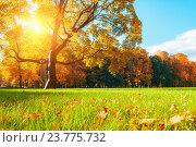 Купить «Осенний пейзаж -  живописное осеннее дерево, освещенное солнечным светом. Михайловский сад, Санкт-Петербург», фото № 23775732, снято 3 октября 2016 г. (c) Зезелина Марина / Фотобанк Лори