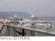 Чайки сидят на парапете на фоне пасмурного моря. Стоковое фото, фотограф Елена Антипина / Фотобанк Лори