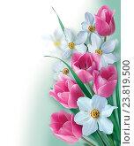 Цветочный фон из весенних цветов. Стоковое фото, фотограф Марина Глянь / Фотобанк Лори