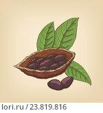 Какао-бобы и листья. Стоковая иллюстрация, иллюстратор Станислав Хомутовский / Фотобанк Лори