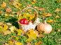 Корзинка со спелыми красными яблоками и желтая тыква на траве среди осенних листьев, эксклюзивное фото № 23820352, снято 16 октября 2016 г. (c) Svet / Фотобанк Лори