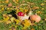 Желтая тыква и яблоки в корзине среди осенней листва, эксклюзивное фото № 23820380, снято 16 октября 2016 г. (c) Svet / Фотобанк Лори