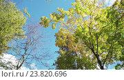 Купить «Падающие листья в осеннем лесу», видеоролик № 23820696, снято 13 октября 2016 г. (c) Vladimir Botkin / Фотобанк Лори